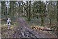 SP0513 : Footpath to the Roman Villa, Chedworth by Christine Matthews