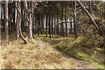 NS2209 : Woodland Path by Billy McCrorie