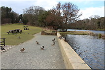 NS2209 : Ducks at Swan Pond by Billy McCrorie