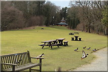NS2209 : Picnic Area at Swan Pond by Billy McCrorie