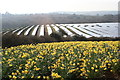 SW7630 : Solar array at Higher Tregarne by Rod Allday