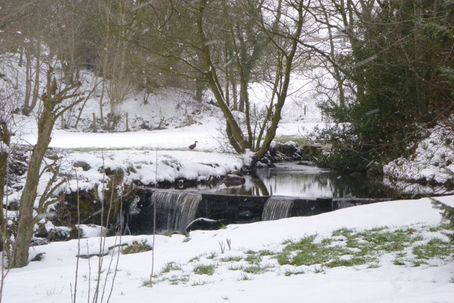 Eldwick Beck at the Old Cornmill