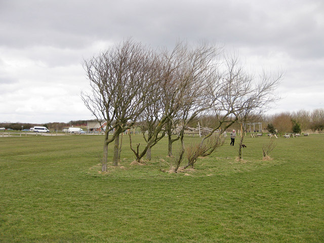 Small, windswet copse