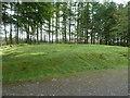 NX6664 : Grassy area behind Kenick Burn car park by Ann Cook
