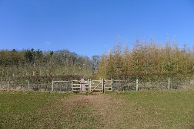 Bridleway into Smith Hills wood
