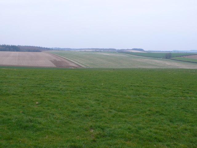 Countryside at Tarrant Rushton
