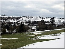 NT4728 : A view over the pastures of Selkirk by James Denham