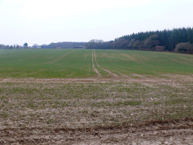 Arable Field at Windy Corner