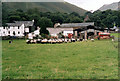 NY1716 : Croft Farmhouse and Cafe Buttermere by Jo Turner