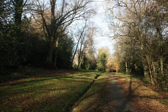 Footpath, Tunbridge Wells Common