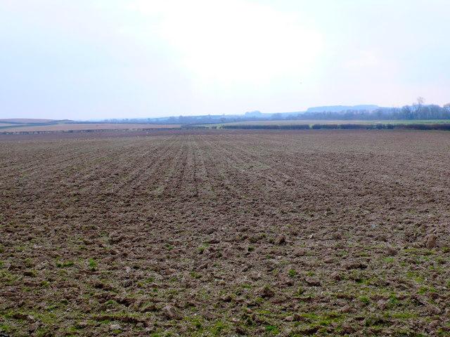 Fields near Witchampton
