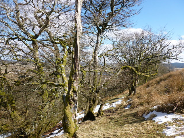 Trees on northern slope of Loudoun Hill