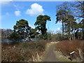 TF8843 : Nature trail near Holkham Hall by Richard Humphrey