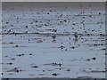 NU0745 : Waders on Goswick Sands by Oliver Dixon
