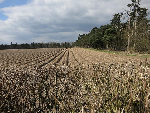 Furrowed field by Croxton Road