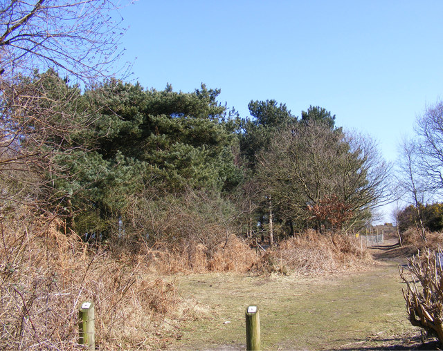 Footpath off Minsmere Road