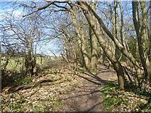 TQ4468 : Path in Petts Wood by Marathon