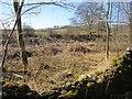 NT4528 : Woodland, Philiphaugh Estate by Richard Webb