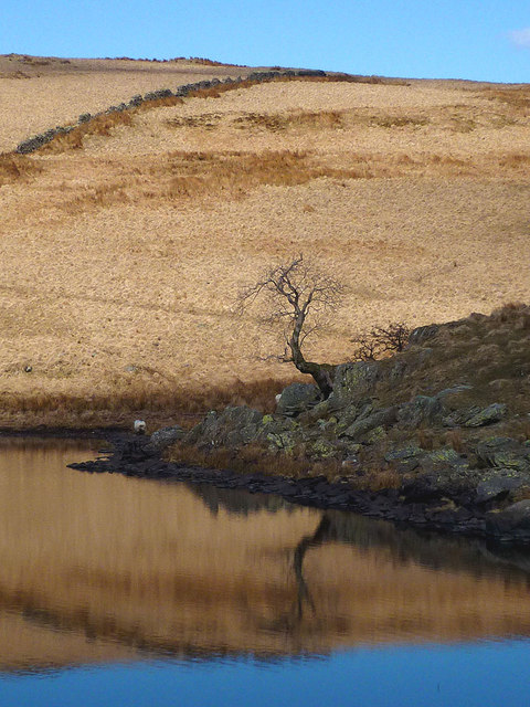 Solitary tree at Skeggles Water