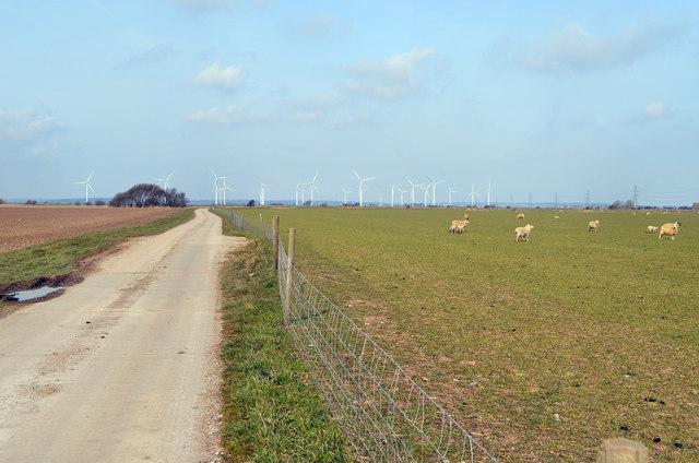 Sheep and Wind Turbines