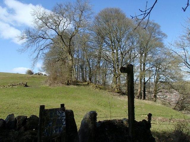Field by Pratthall Lane