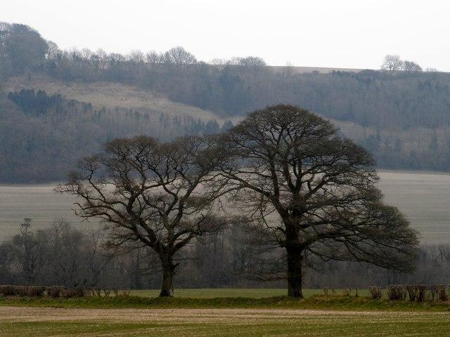 Trees and farmland near Minterne Parva