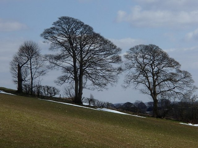 Hillside fields and trees