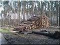 SU8056 : Roadside timber stack by David Martin