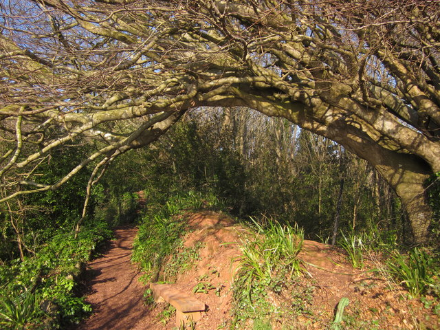 Seat and tree, Oddicombe