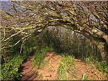 SX9265 : Seat and tree, Oddicombe by Derek Harper