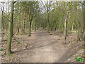 TL5127 : Path in Linnets Wood by Roger Jones