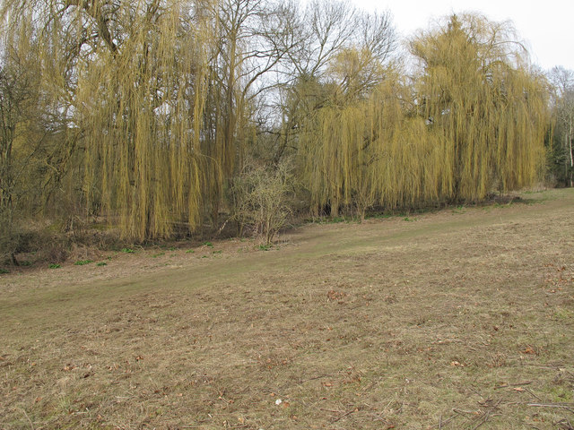 Weeping Willows in Aubrey Buxton Nature Reserve