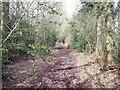 SK0741 : Overgrown lane by Ian Calderwood