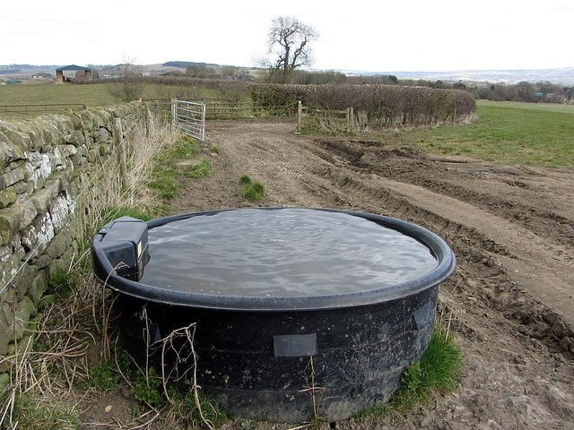 Water trough west of Nafferton Farm