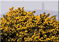 J5072 : Whins, Ballyreagh, Newtownards by Albert Bridge