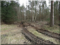 TL8489 : Forestry operations track by Hugh Venables