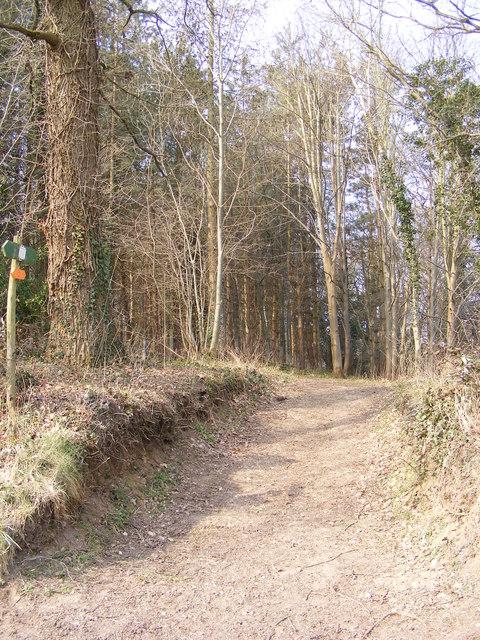 Open Access Path off Landlow Lane