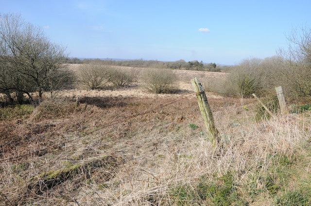 Rough grazing near Llangynog