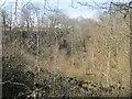 SO7074 : Railway cutting, Wyre Forest by Richard Webb