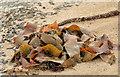 J4682 : Seaweed, Helen's Bay (2013-2) by Albert Bridge