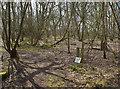SJ5683 : Sandymoor Wood by Ian Greig