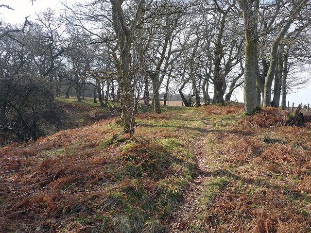 Path through Drummondreach Wood