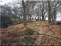 NH5857 : Path through Drummondreach Wood by Julian Paren