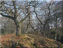 NH5857 : Drummondreach Wood by Julian Paren