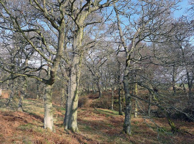 Drummondreach Wood and its natural woodland