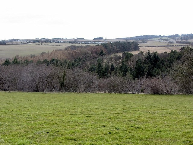 Whittle Dene and Swarden Dene west of Whittle Farm