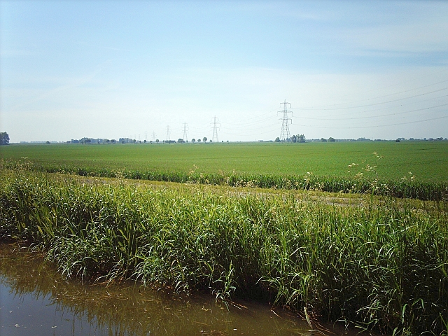 Farm track by the bank of the Well Creek