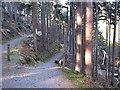 SN7673 : Hafod - paths near Rhaeadr Peiran by Rudi Winter