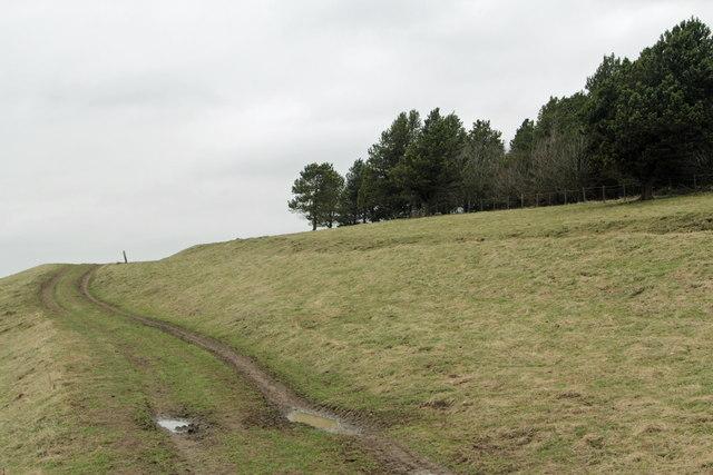 The Footpath across Calton Pastures