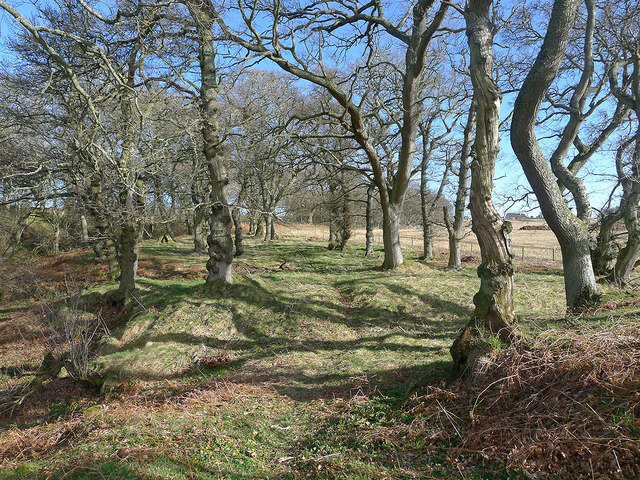 Sunny Spring afternoon in Drummondreach Wood